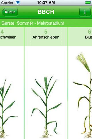 Pflanzen erkennen